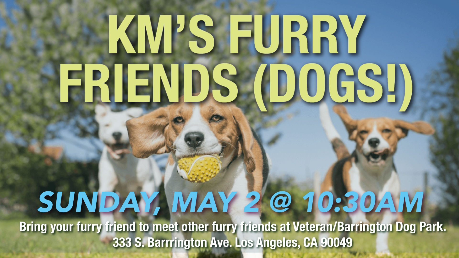 KM's Furry Friends (Dogs!)